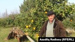 Mirzəmməd Ağayev