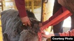 خرس قهوهای از شکنجه گروه نمایشی موتورسوار نجات یافت