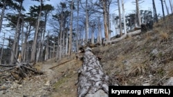 Последствия лесных пожаров в Ялтинском горно-лесном природном заповеднике, архивное фото