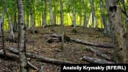 Крымский природный заповедник, сентябрь 2019 года