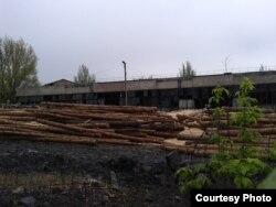 Фото автора: зрізані дерева, які використовують для кріплення у шахті на території колишнього заводу імені Малишева, де нелегально добувають вугілля