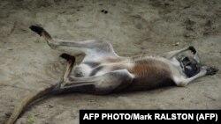 AFP нашрининг фотоси