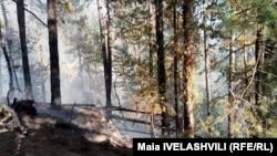 ნახანძრალი ტყე