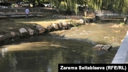 Цапля Сима на реке Салгир в Симферополе