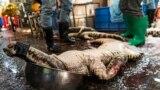 """Убитый крокодил на """"мокром рынке"""" в Гуанчжоу, КНР"""