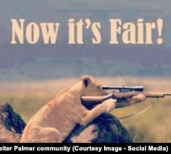 """Сообщество """"Охота на Палмера"""" в социальной сети Facebook"""