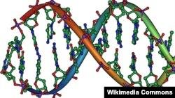 Struktura e një pjese të ADN-së