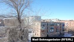 Балқаш қаласында бос қалған көппәтерлі үйдің төбесіне өскен ағаш. Қарағанды облысы, 10 ақпан 2013 жыл.