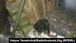 Чорний кіт попереджав про обстріли
