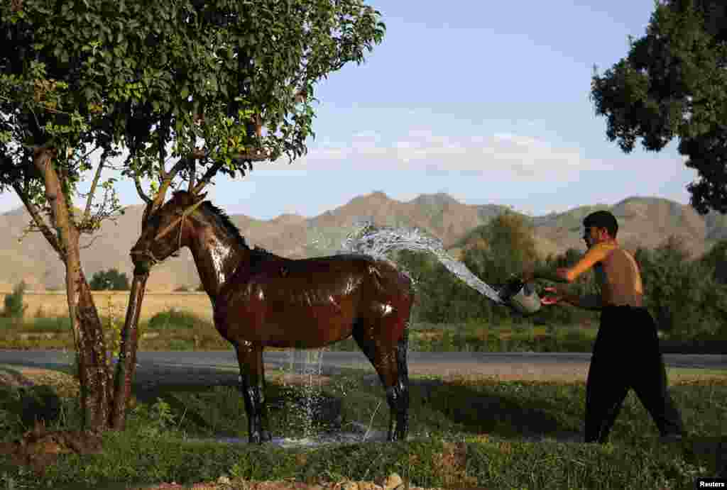 A man washes his horse in Kabul. (Reuters/Mohammad Ismail)