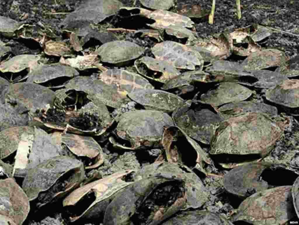 پریشان؛ قتلگاه لاکپشتها و پرندگان سوخته - این تصاویر تنها گوشهای چیزی است که این روزها بر سر اکوسیستم منطقهای تالاب پریشان آمده است.