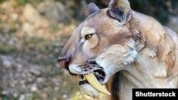 Модель саблезубой кошки