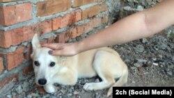 Бездомная собака - одна из будущих жертв двух студенток из Хабаровска