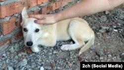 Фото одного из убитых девушками животных