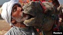 مصري يقبل ناقته أمام سياح اجانب عند الاهرام