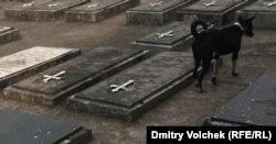 Армянское кладбище в Дакке