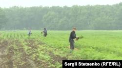 Навіть попри проливний дощ робота на полях не зупиняється
