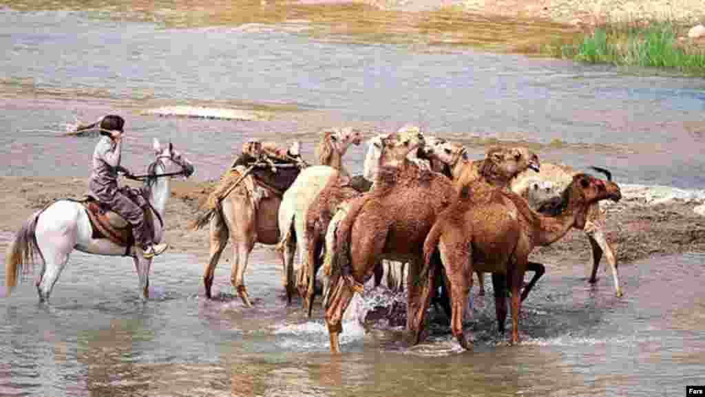 Образуют 4 родственные племенные группы: пиш-е куха и пошт-е куха в Лурестане, мамасани и кухгилуйе в Фарсе