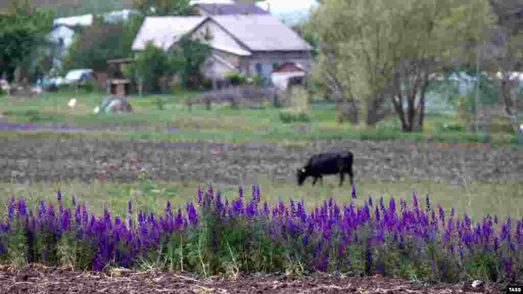 На околиці села пасеться корова