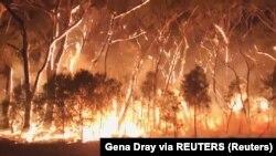 Під час лісової пожежі в Австралії (ілюстраційне фото)