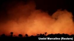 شمار آتشسوزیهایی که امسال در جنگلهای آمازون برزیل به وقوع پیوسته ۸۳ درصد افزایش یافته است