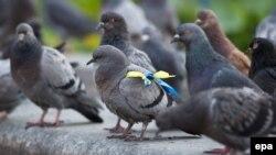 Голуби на площади Независимости в Киеве