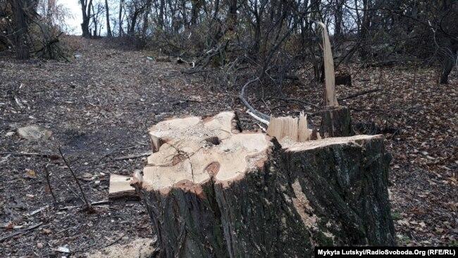 Після вирубки лісу залишаються корчі й гілляки, які можуть потрапляти у водойми і захаращувати русло, пояснює Віктор Вишневський
