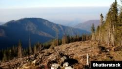 Вирубка лісів у Карпатах (©Shutterstock)