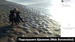 Медузы на азовском побережье Крыма (скриншот Вести Крым )