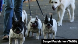 Выгул собак в Москве