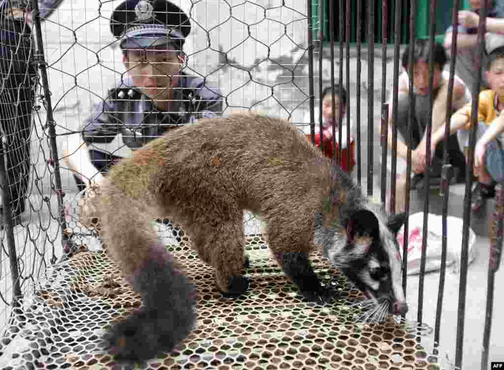 Проте на деяких «мокрих ринках» продаються на м'ясо й екзотичні тварини, такі, як цивета. Спалах коронавірусного захворювання, відомого як SARS, у 2003 році призвів до загибелі сотень людей у декількох країнах. Вважається, що епідемія почалася після того, як кажан заразив цивет, які, в свою чергу, заразили людину. Китайська влада тоді відреагувала, наказавши вбити близько 10 тисяч цивет