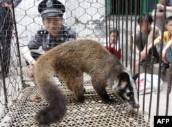 Дикая циветта в клетке на рынке «Байшачжоу» в городе Ухань. Вспышка эпидемии коронавируса, известного как SARS, в 2003 году привела к гибели сотен людей в нескольких странах. Эпидемия тогда началась после того, как человек употребил в пищу мясо циветты, заразившейся вирусом от летучей мыши. Китайские власти распорядились тогда уничтожить около 10 тысяч циветт.