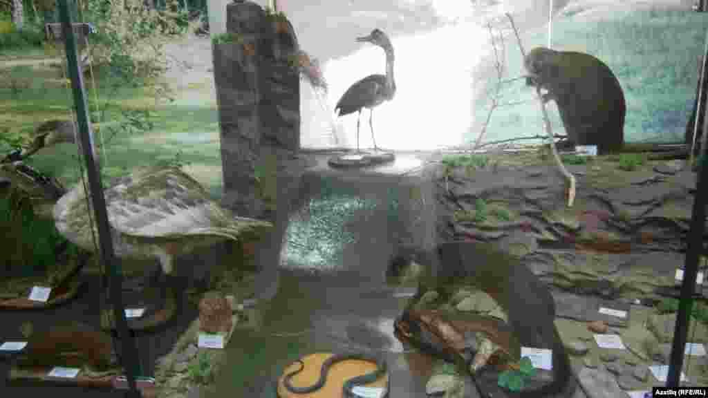 Чулман төбәгендәге җәнлек һәм кошлар