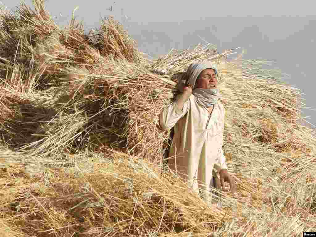 A boy carries hay in a field outside the village of Nakhonay in Panjwai district, southern Afghanistan. Photo by Denis Sinyakov (Reuters)