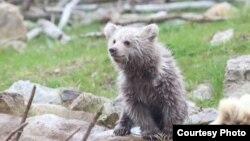 Прокуроры оштрафовали владельца контактного зоопарка за то, что медведь находился не в клетке, а на открытой территории и представлял опасность для людей