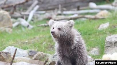 Чешский зоопарк ищет таджикское имя для медвежонка