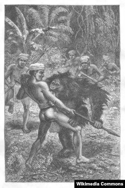 Даяки ловят орангутана. Гравюра Джозефа Вулфа. 1869 (Даяки – аборигены острова Калимантан)