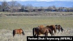 Кони пасутся на лужайке
