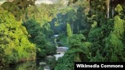 Остров Борнео - третий по величине в мире - разделен между Малайзией, Индонезией и Брунеем.