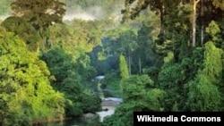 Остров Борнео - третий по величине в мире - разделен между Малайзией, Индонезией и Брунеем