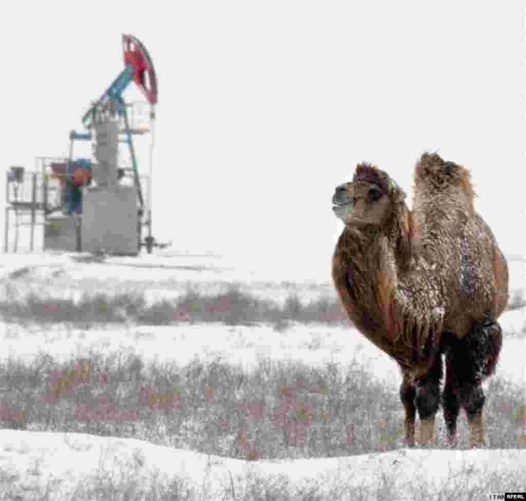 Казахстан. 23 – 27 мая 2011 года #6