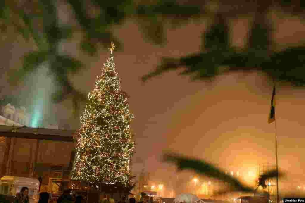 Головна новорічна ялинка України, яку привезли з села Вишнівка (Івано-Франківська область), на Софійській площі в Києві, 16 грудня 2014 року