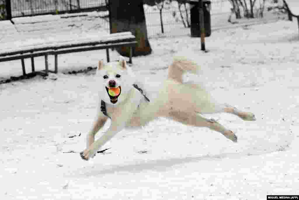 A dog catches a ball as he runs through snow at a park in Milan. (AFP/Miguel Medina)