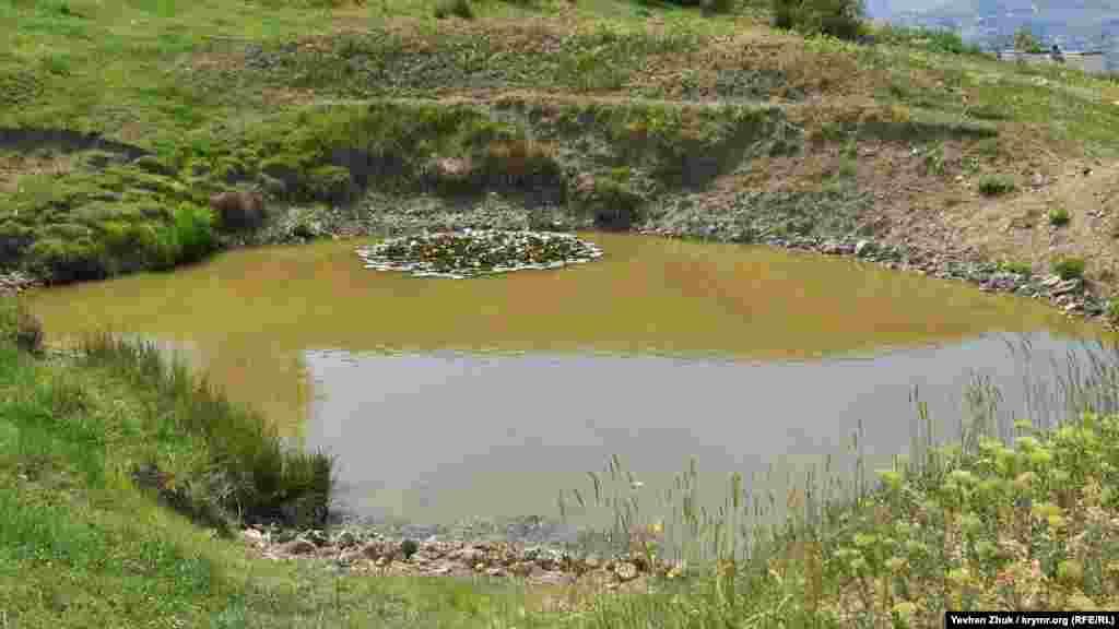 Небольшой пруд используется как водопой для скота