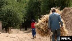 Афтидан¸ расмий Тошкент қишлоқлардаги ишсизлик ва қашшоқлик учун маъсулиятни ҳам фермерлар зиммасига юкламоқчи.
