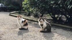 Во градскиот парк во Лима дружење со 100- тина мачки