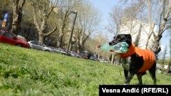 Pas Roki iz Gradske čistoće