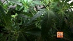 Вашингтон требует разрешить курение и продажу марихуаны
