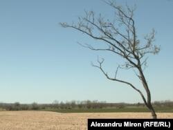 """Căldura apăsătoare face ca pământul să """"fiarbă"""" chiar de la începutul lunii mai. Comuna Mîrșani, județul Dolj."""