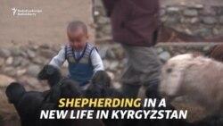 Shepherding In A New Life In Kyrgyzstan